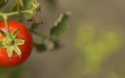 16 Octubre, Día Mundial de la Alimentación: #HambreCero