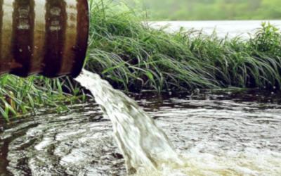 Imitando la depuración natural del agua: filtros verdes