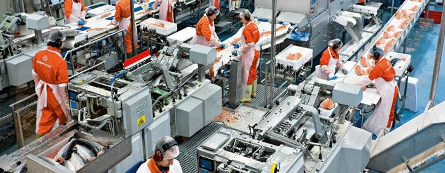¿Cómo mejorar tu planta de procesamiento sin grandes inversiones?
