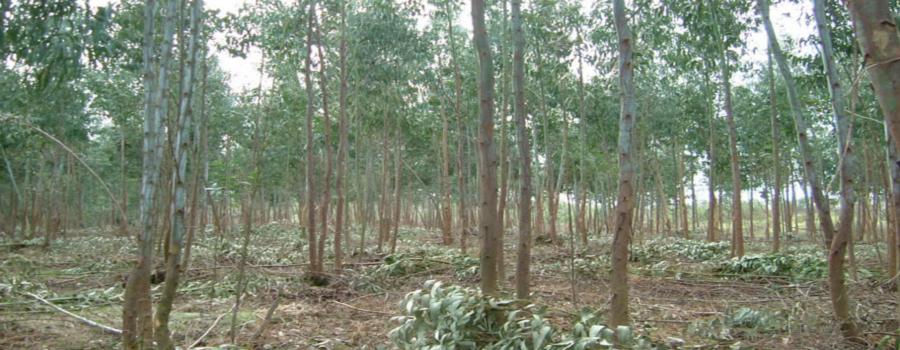 ¿Cómo recuperar la biomasa forestal abandonada?