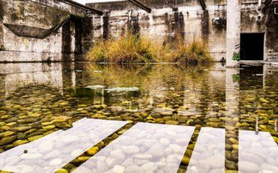 Heterotrophic microalgae, night efficiency in wastewater treatment