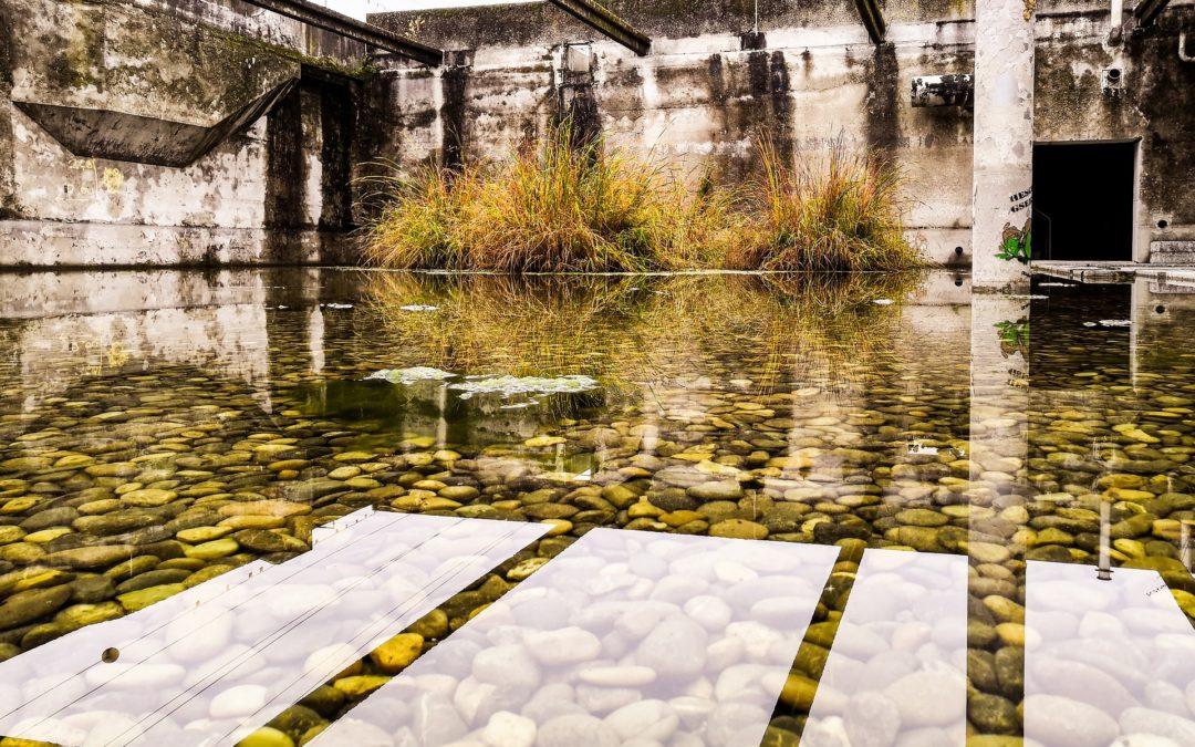 Microalgas heterótrofas, eficiencia nocturna en el tratamiento de aguas residuales
