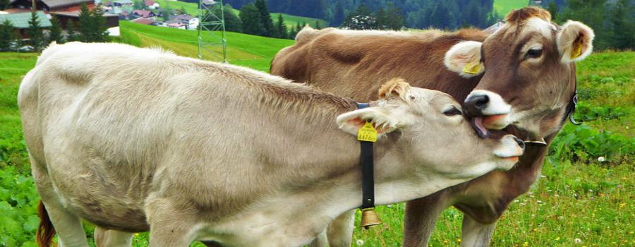 Beneficios económicos de la agricultura conectada